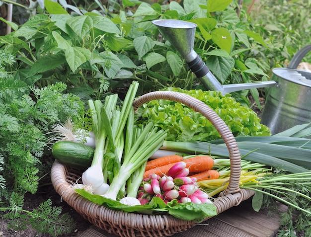 Organiczne warzywa w wiklinowym koszu w ogrodzie warzywnym