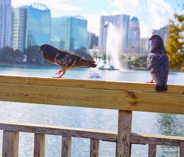 Orlando linia horyzontu fom jezioro eola floryda usa