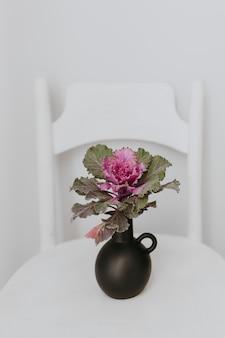 Ornamentacyjny jarmuż w czarnej wazie na białym stole