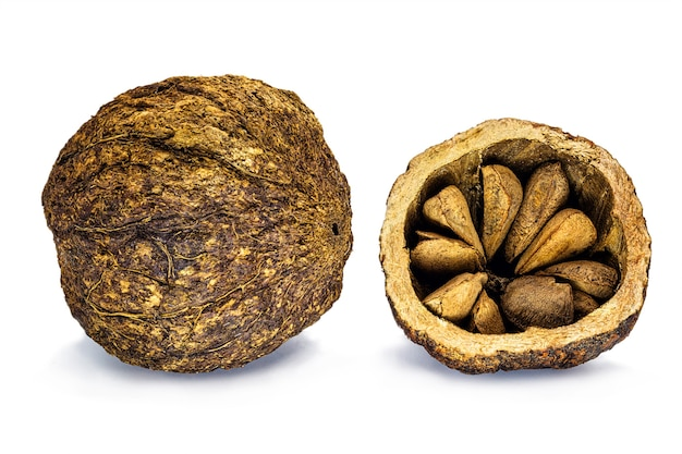 Orzech kokosowy z orzecha brazylijskiego ze skorupką na białym tle, orzech zwyczajny z ameryki południowej