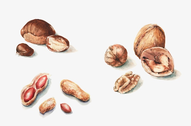 Orzechy kasztanowe całe i pół orzechów włoskich