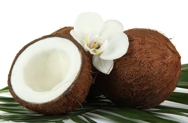 Orzechy kokosowe z liśćmi i kwiatem, na białym tle