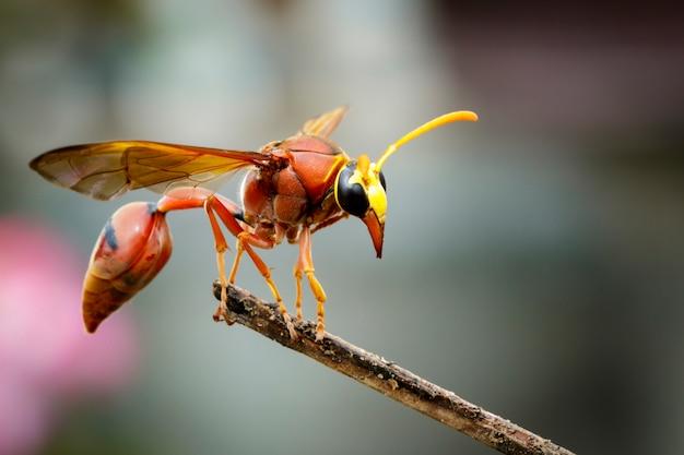 Osa pottera (delta sp, eumeninae) na suchych gałęziach. owad zwierząt