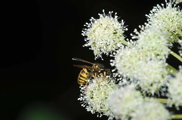Osa siedzi na widoku z boku kwiatu