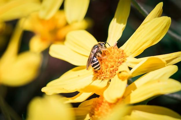 Osa w kwiatku