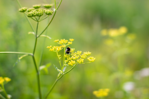 Osa z ogrodu na żółtym dzikim kwiecie.