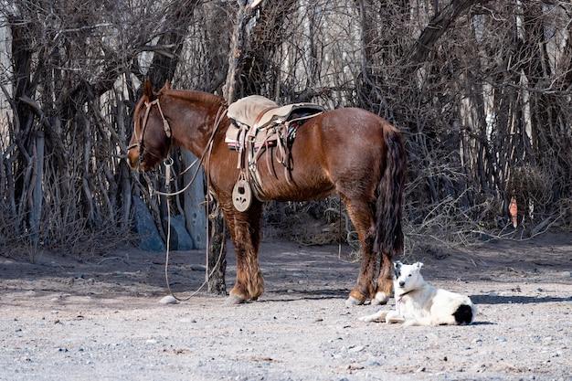 Osiodłany koń argentyńskiego gaucho, obok odpoczywającego psa.