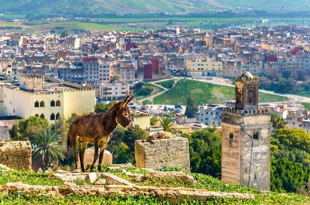 Osioł na murach miejskich fezu - maroko