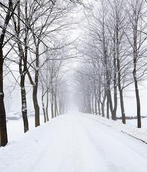 Ośnieżona droga w parku w sezonie zimowym. po lewej stronie zbiorniki pokryte śniegiem