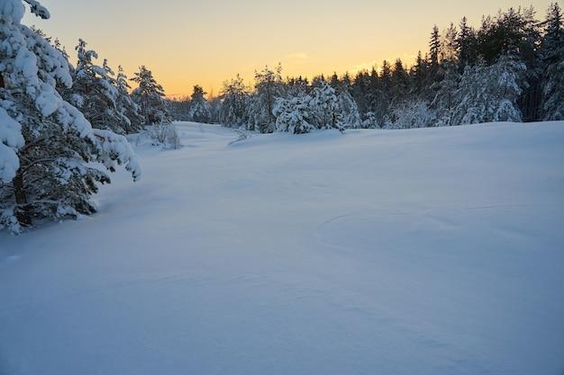 Ośnieżona polana w lesie o zachodzie słońca. skopiuj miejsce.