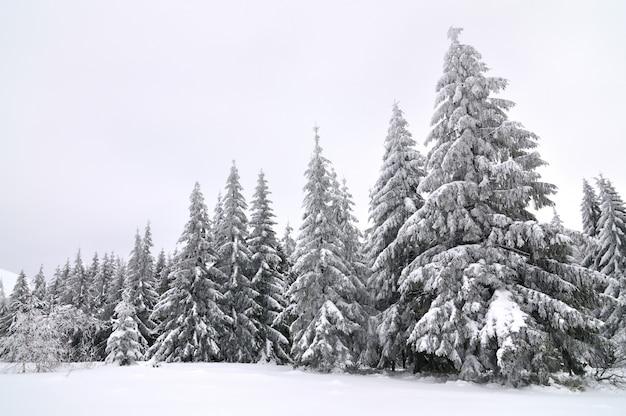 Ośnieżone drzewa na tle nieba