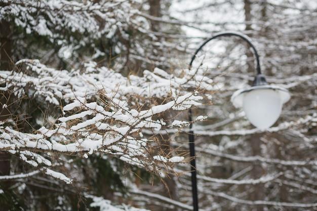 Ośnieżone drzewo i lampa. zimowe miękkie tło ze świerkiem