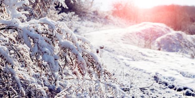 Ośnieżone gałęzie drzew i krzewów w zimowy poranek o wschodzie słońca