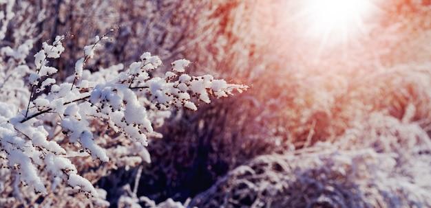 Ośnieżone gałęzie roślin w lesie o poranku podczas wschodu słońca