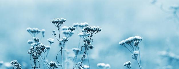 Ośnieżone suche pędy roślin na rozmytym tle w jasnoniebieskich pastelowych kolorach, świąteczne tło