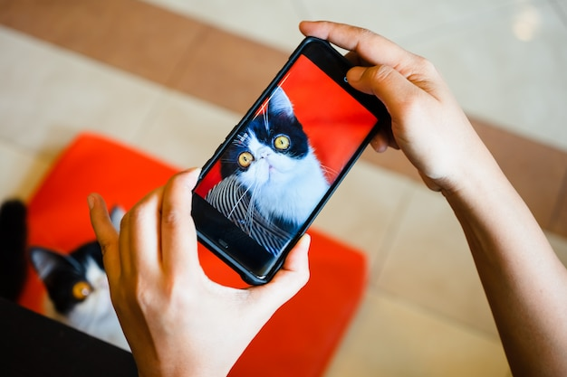 Osoba fotografuje kota za pomocą smartfona