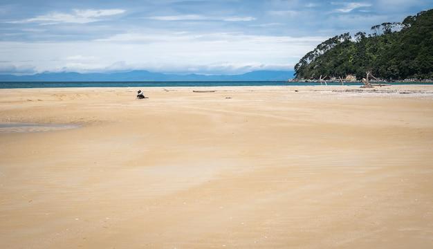 Osoba relaksująca się na odległej plaży ze złotymi piaskami zastrzelona w parku narodowym abel tasman w nowej zelandii