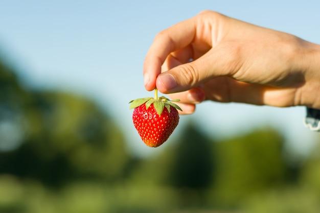 Osoba trzyma czerwoną truskawkę