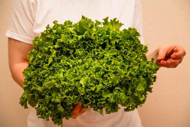 Osoba trzyma zieloną sałatę w rękach. koncepcja zdrowego żywienia