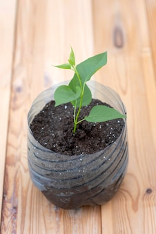 Osoba trzymająca roślinę w plastikowej doniczce