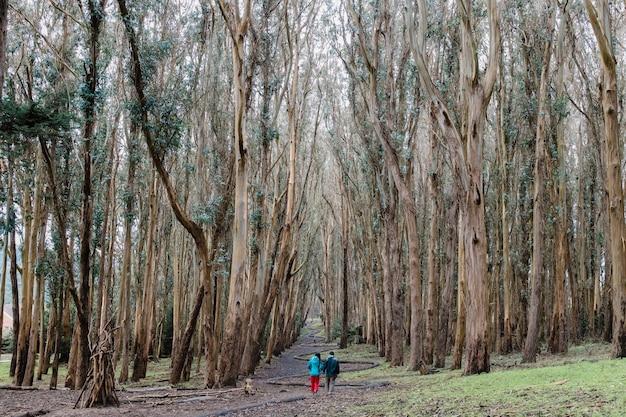 Osoba w niebieskiej kurtce i niebieskich dżinsach spacerująca w ciągu dnia ścieżką między drzewami