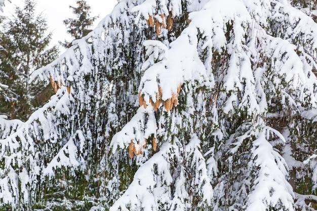 Ośrodek narciarski armatki śnieżne biegnące po śniegu i drzewach inii ferie zimowe w górach na nartach