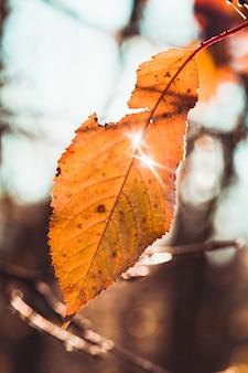 Ostatni jesienny liść na gałęzi i słońcu