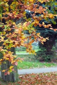 Ostatnie złote liście drzewa w jesiennym parku miejskim