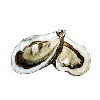 Ostryga, akwarela na białym tle ilustracja małży.