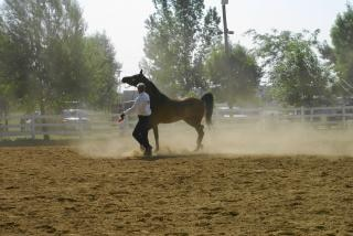 Oswajania konia