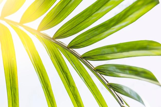 Oświetlenie słońca przez liści palmowych
