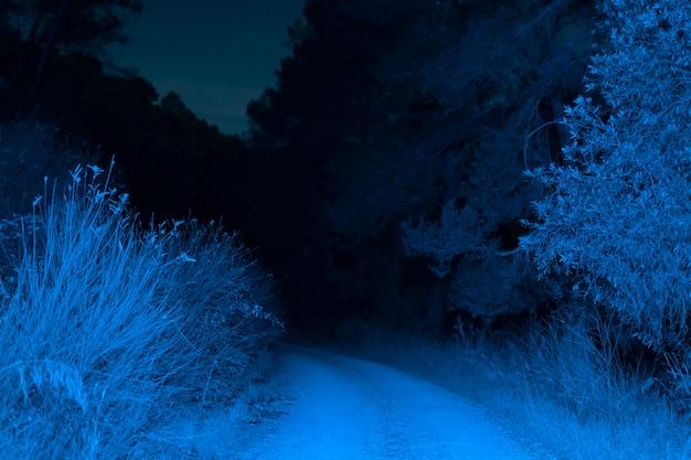 Oświetlona droga w lesie w nocy