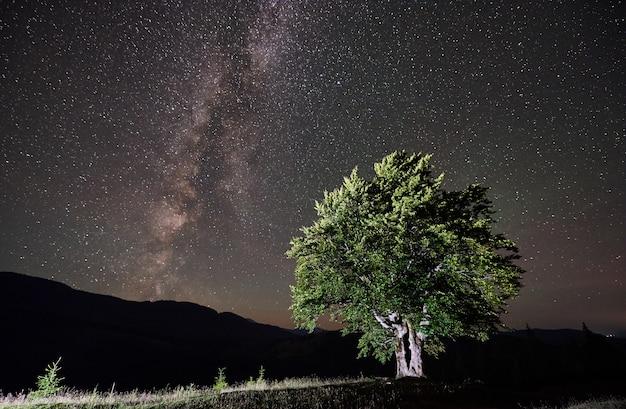 Oświetlone samotne wysokie drzewo pod nocnym niebem pełnym gwiazd i drogi mlecznej