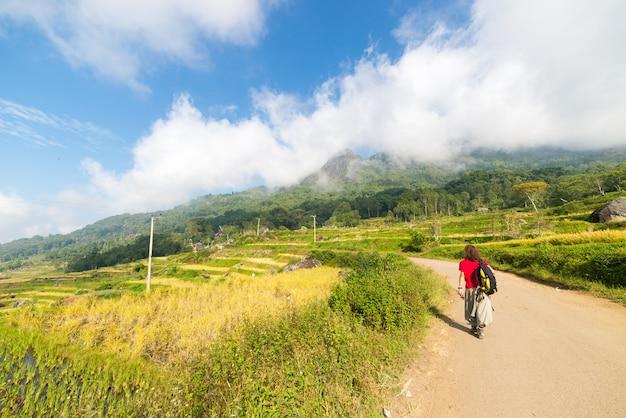 Oszałamiająca eksploracja pól ryżowych