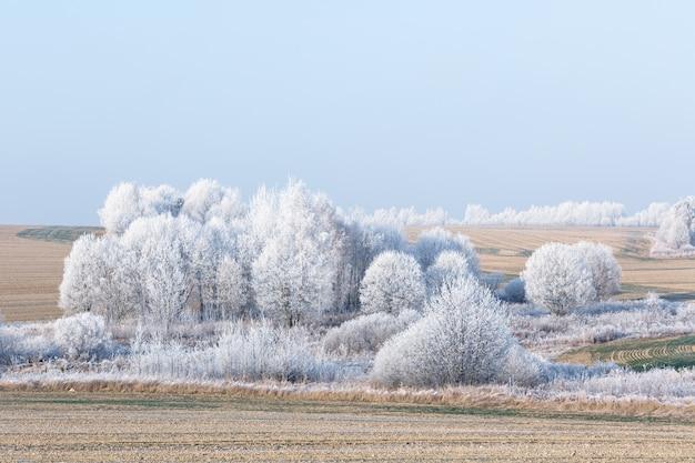 Oszronione drzewa w niebieskim blasku błyszczą olśniewającą bielą. zimowy krajobraz