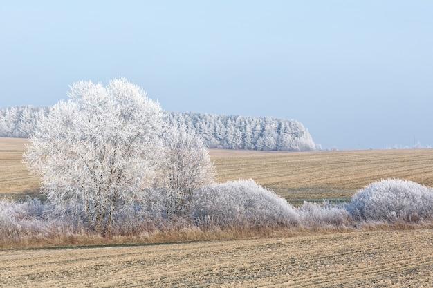 Oszronione drzewa w niebieskim blasku błyszczą olśniewającą bielą