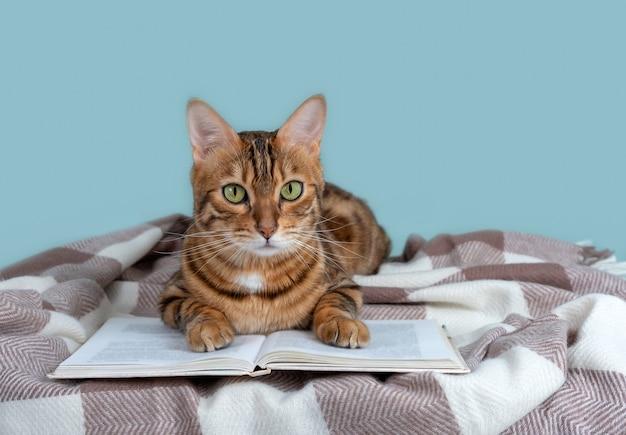 Otwarta książka i słodki kot bengalski na kocu w kratę