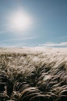 Otwarte pole z białą puszystą trawą na tle błękitnego nieba