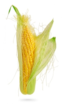 Otwarty kolby kukurydzy cukrowej na białym tle na białej przestrzeni ze ścieżką przycinającą. element projektu do etykiety produktu, druk katalogu.