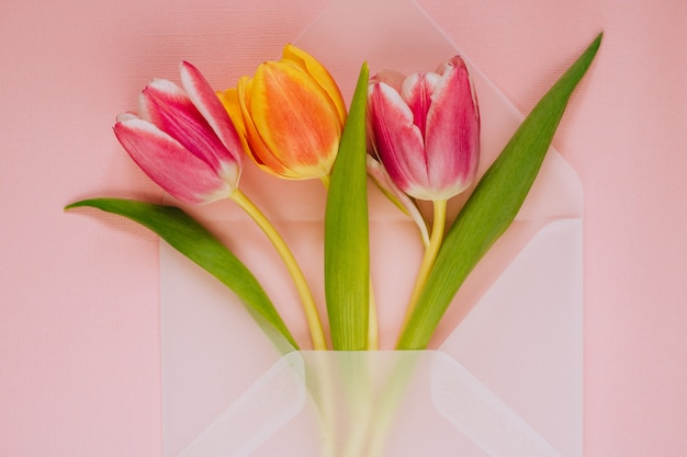 Otwórz matowe przezroczyste koperty z wielokolorowe tulipany na różowym tle