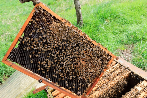 Otwórz szczegóły ula. pszczelarstwo, rolnictwo, życie na wsi.