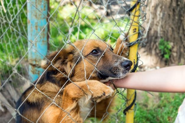 Outddor bezdomny schron dla zwierząt. smutny kundel pies