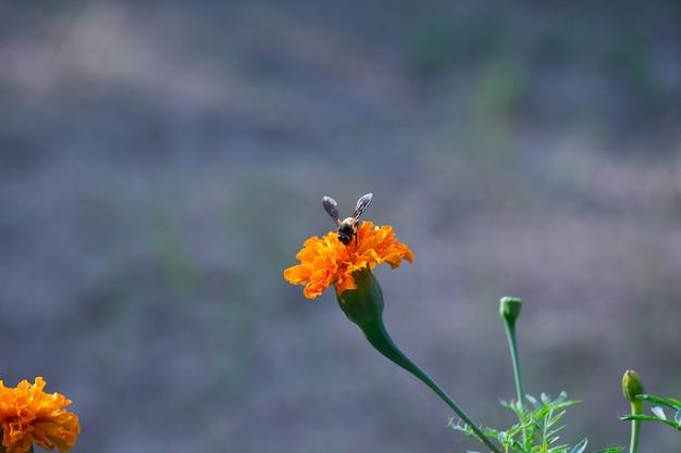 Owad na kwiatku nagietka