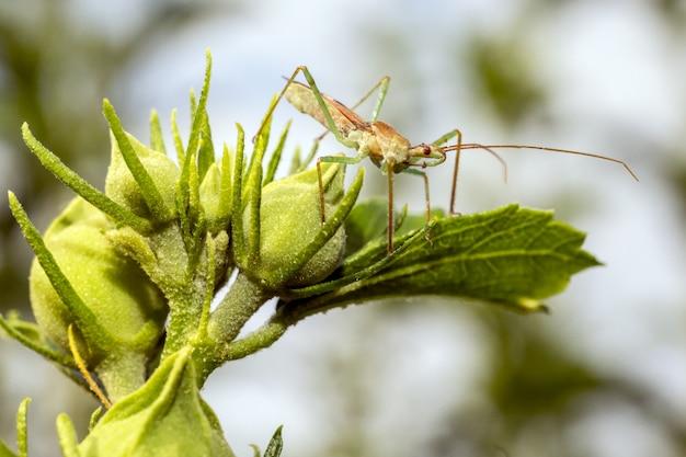 Owad z długimi antenami na roślinie