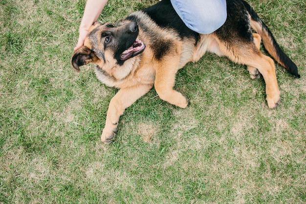 Owczarek niemiecki, leżąc na zielonej trawie z mężczyzną. odpoczywający pies