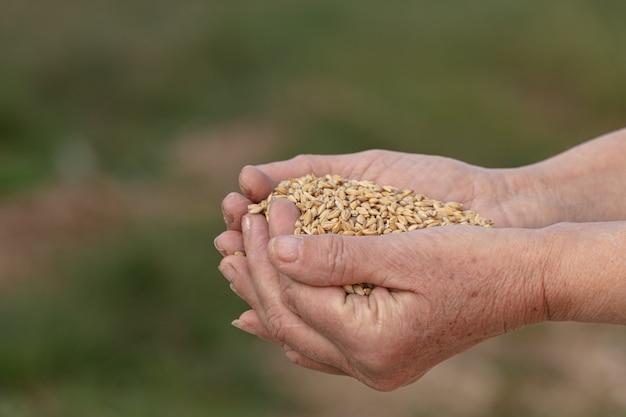 Owies dla zwierząt na wsi trzymając się za ręce