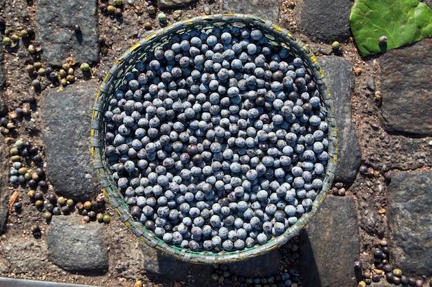Owoc acai z amazonki. świeży owoc