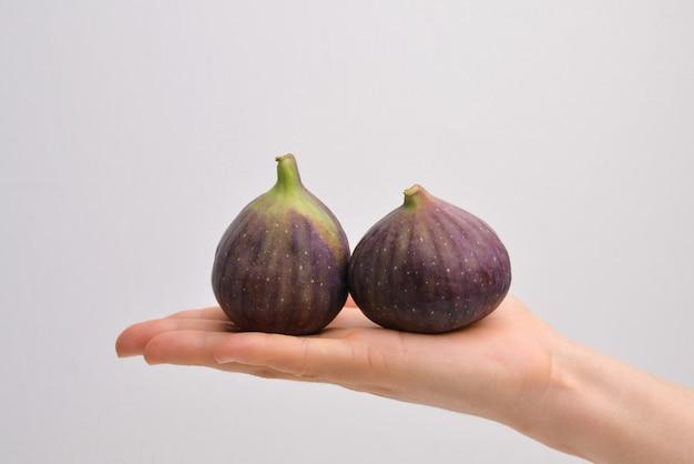 Owoc figowy w kobiecej dłoni dwie figi na szarym tle kobiece ręce trzymają fig