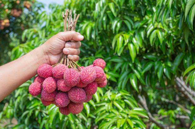 Owoc liczi