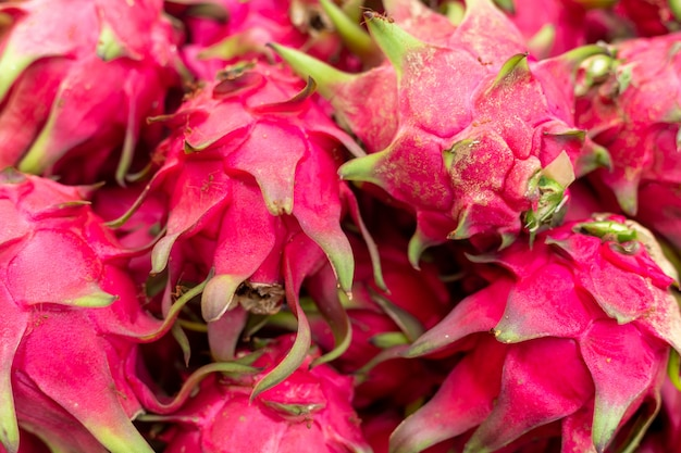 Owoc smoka na roślinie, pitaya lub pitahaya to owoc kilku rodzimych gatunków kaktusów.
